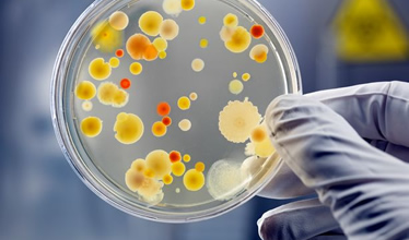 segment_microbiology